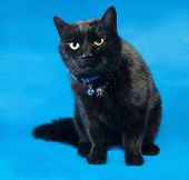 Black Cat In Blue Collar Sitting On Blue