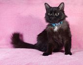 Black Fluffy Cat Sitting On Pink Sofa