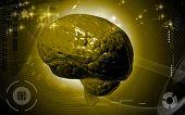 picture of thalamus  - Digital illustration of  brain in colour  background - JPG
