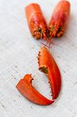 pic of carapace  - Close up of lobster carapace on a table