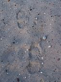 foto of footprints sand  - Two footprints in the wet sand near the sea - JPG