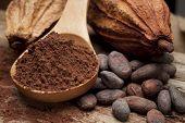 foto of cocoa beans  - Cocoa  - JPG