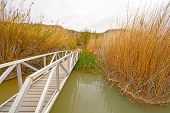 stock photo of wetland  - Footbridge across a Wetland Pond in Big Bend National Park in Texas - JPG