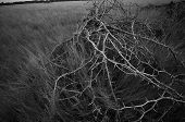 image of thorns  - Dry thorn of die bush plant in grass field - JPG
