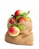 Sack Of Apples