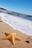 Estrela do mar em uma praia
