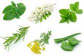 Ervas medicinais aromáticas