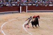 MADRID - AUGUST 8: The torero Juan Pablo Sanchez fights a bull named Mayoral in the Las Ventas bullr