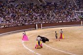 MADRID - AUGUST 8: The torero Juan Pablo Sanchez fights a bull named Caracolo in the Las Ventas bull