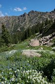 Indian Peaks Wildblumen
