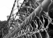 concertina wire in black and white