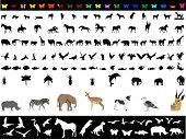 Lots of animals (vectors)