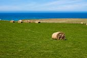 Hay Bales On Coast