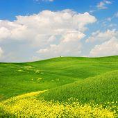 Flowered Landscape