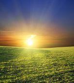 pôr do sol sobre o campo verde