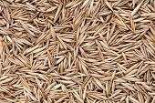 High Quality Seeds Of Lawn Grass, In A Texture Form For Your Green Garden. Can Be Used By Seed Produ poster