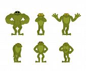 Frog Set Poses. Toad Happy And Yoga. Anuran Sleeping And Angry. Guilty And Sad. Vector Illustration poster