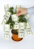 image of tithe  - hands blows off dollars from the tree of money - JPG