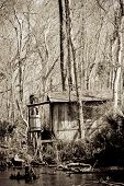stock photo of bayou  - Old shack in a Bayou in New Orleans - JPG