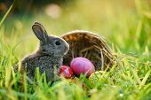 Easter Bunny And Easter Eggs On Green Grass Outdoor / Colorful Eggs In The Nest Basket And Little Ra poster