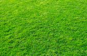 Background Of Green Grass Field. Green Grass Pattern And Texture. Green Lawn For Background. poster