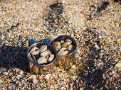 Cups With Shells On The Seashore On The Shell Bay Of The Azov Sea. poster