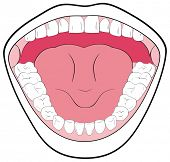 VECTOR - Opened Mouth Showing the Teeth, Tongue, Tonsils - Can be useful in Schools & Clinics - You can write Types of Teeth & parts of Mouth - Simple & Attractive