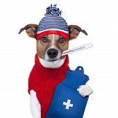 picture of veterinary surgery  - sick ill cold dog with fever and hot water bottle - JPG