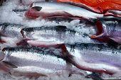Fresh Salmon In A Market