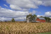 image of dairy barn  - a corn and dairy farm lies under september skies in rural minnesota - JPG