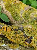 Oceaan Moss