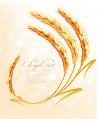 Ears of wheat background. Vector illustration