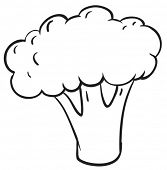 illustration of cauliflower on a white background
