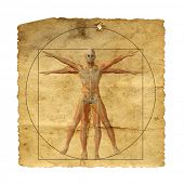 Concept or conceptual vitruvian human body drawing on old paper or book background as metaphor to anatomy,biology,Leonardo,classic,anatomical,circle,symbol, revival,proportion,skeleton or manuscript