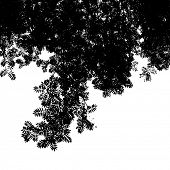 Abstract background with leaves silhouette of Mountain Ash, black and white vector illustration