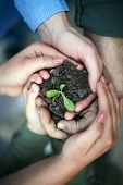 hands surround a new seedling, protecting our environment