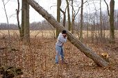 Man Lifting Tree