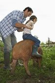 Full length of a happy father helping daughter to ride pig in sty