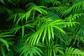 picture of jungle exotic  - Ferns leaves green foliage tropical background - JPG