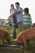 Full length of a man and children watching pigs feed in sty against clear sky
