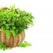 Colección de hierbas frescas picantes en cesta / aislado en blanco / tomillo, albahaca, orégano, perejil, marj