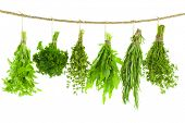 Set of Spice Herbs  /  isolated on white background /  bunches of thyme, basil, oregano, parsley, sa