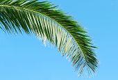 Palm Branch On Background Of Blue Sky