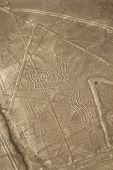 Nazca line - Spider