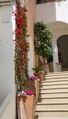 Flowers By Steps In Positano