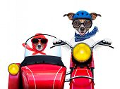stock photo of vespa  - motorbike dogs together in love having a hiloday trip - JPG