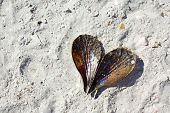 Heart Shaped Seashell Laying On The Beach