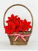 Poinsettias In The Basket On White Background