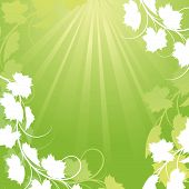 picture of grape-vine  - Vine on a green background Clipping Mask - JPG