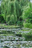 Постер, плакат: The garden of the famous Painter Claude Monet